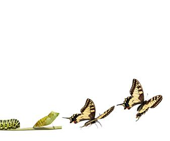 transforming_butterfly
