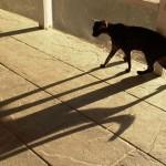 curious cat DE Clark 2015