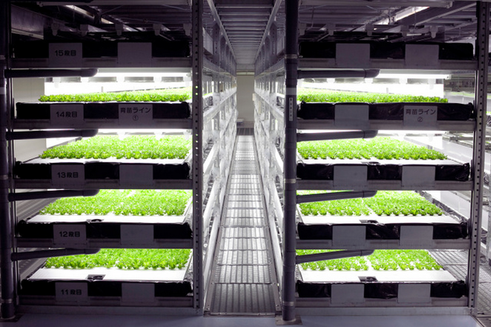Japan Automated farm 1