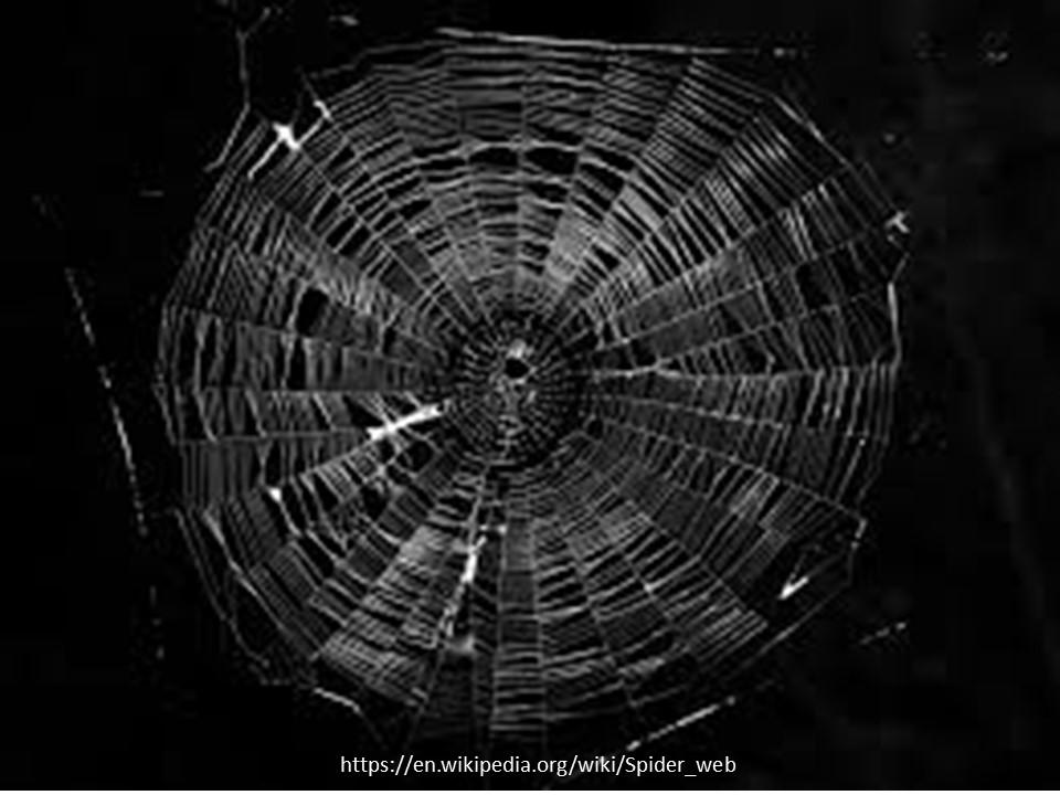 cobweb1